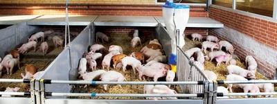 бэзрк белгранкорм ракитное выращиванию свиней вакансии граничит